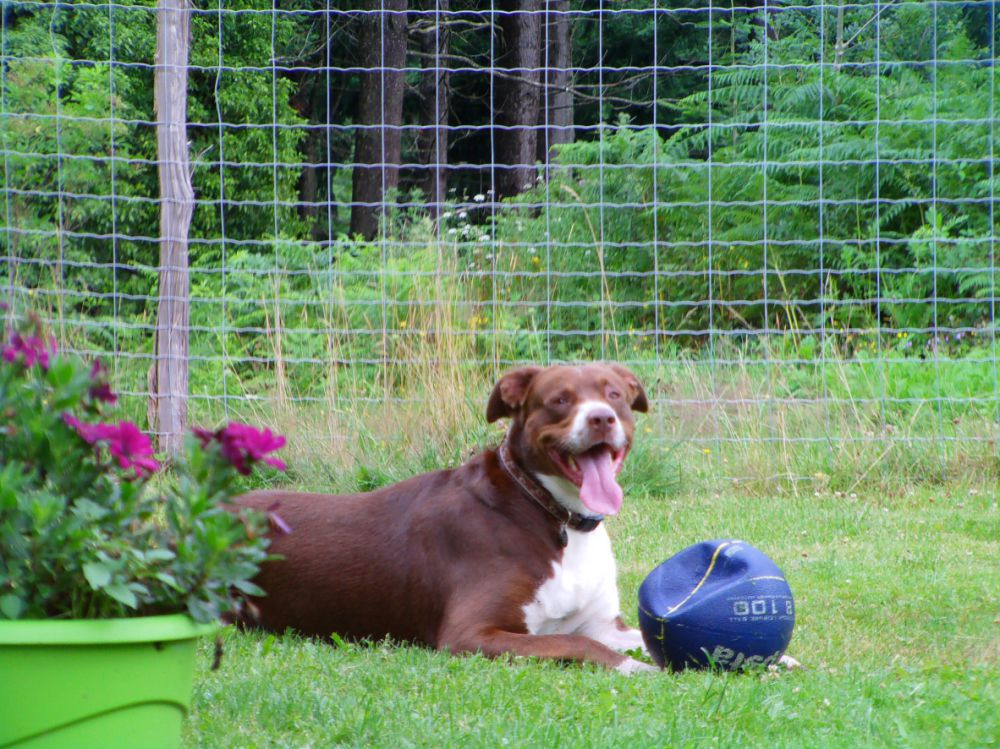 pension chien clermont ferrand