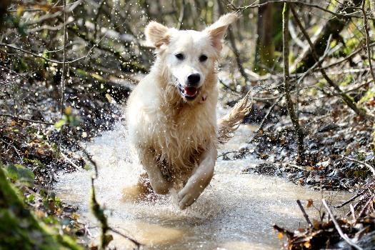 pension chien doubs