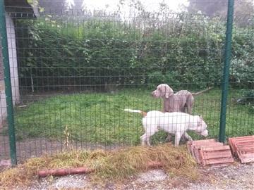 pension chien drusenheim