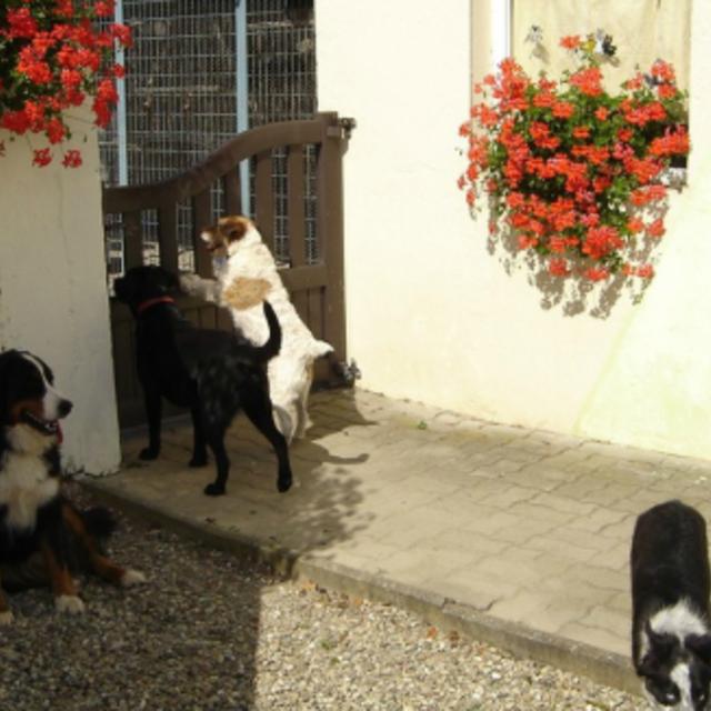pension chien ecluse