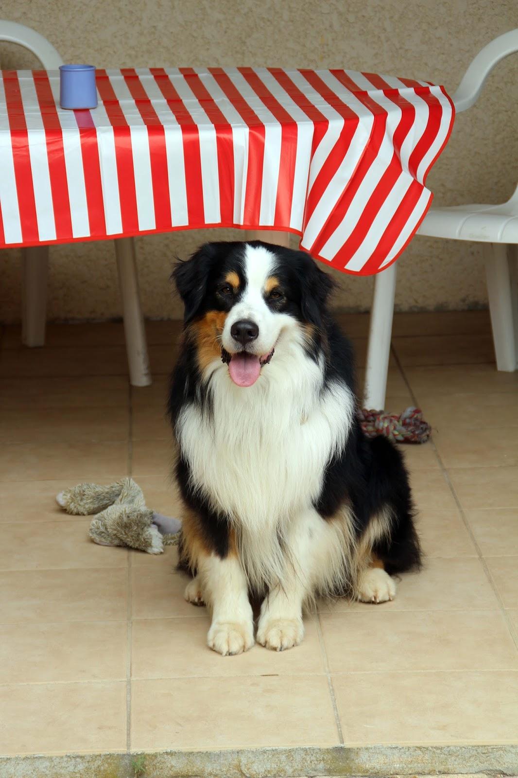 pension chien gruissan