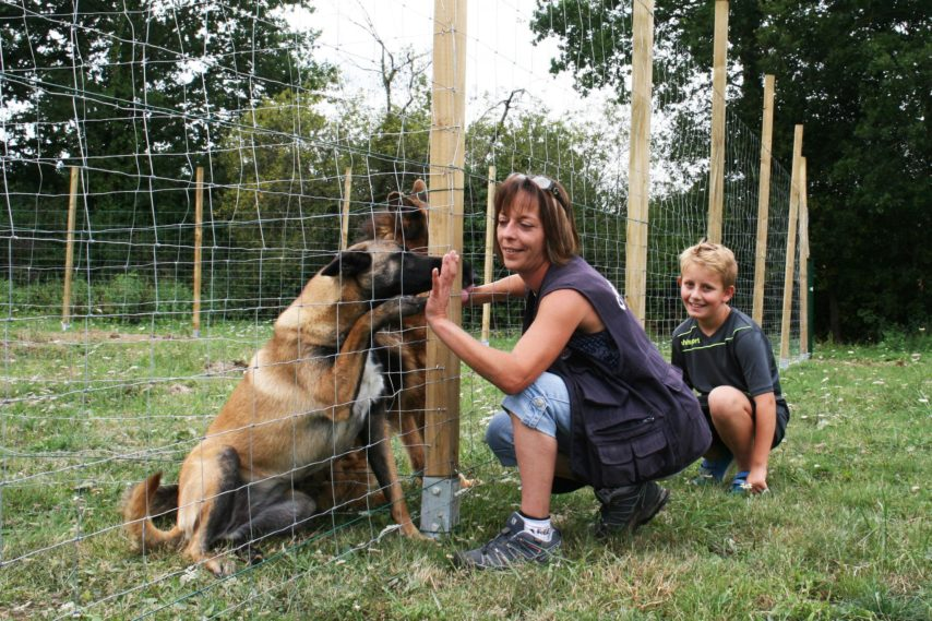 pension chien guerande