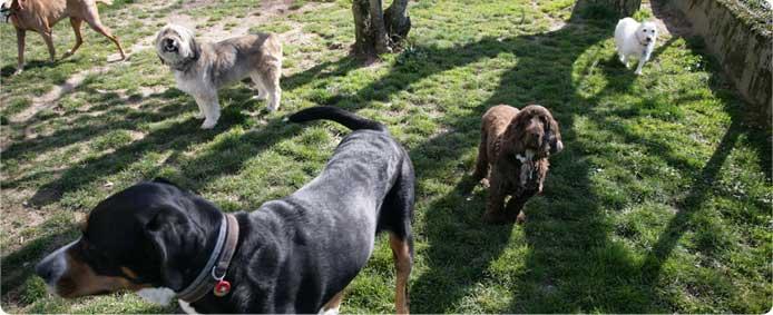 pension chien haute savoie