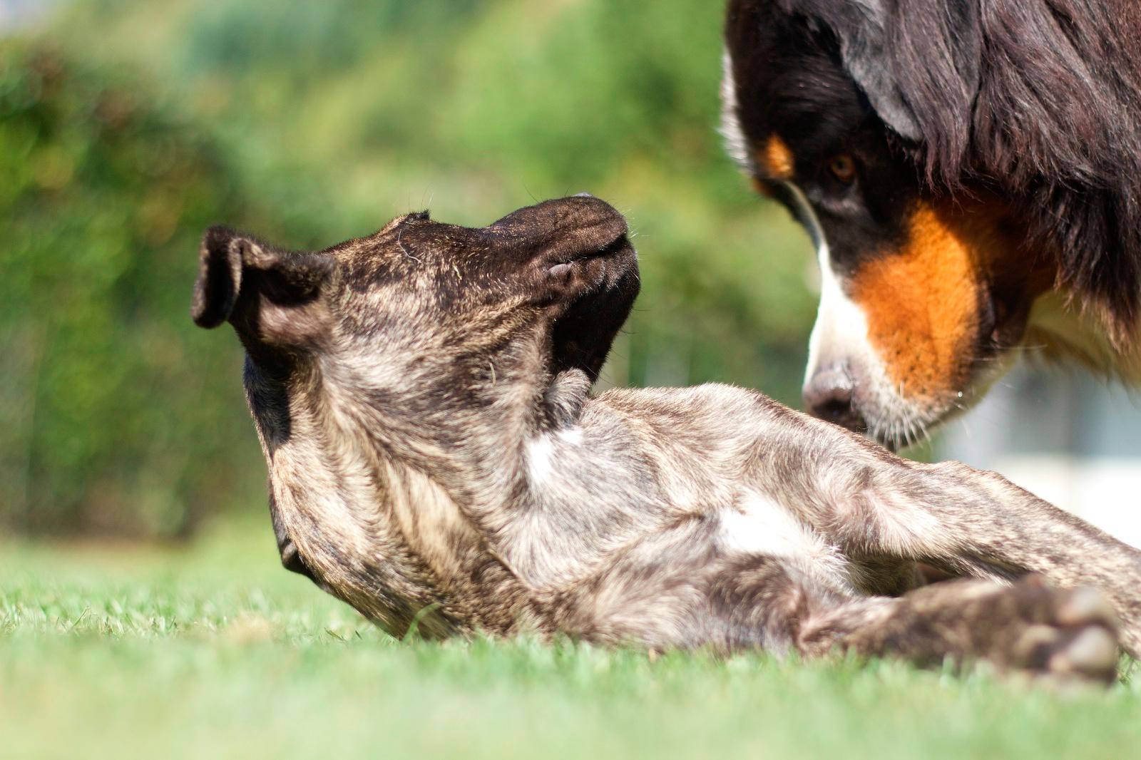 pension chien hautes alpes