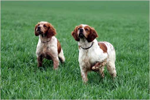pension chien hautes pyrenees