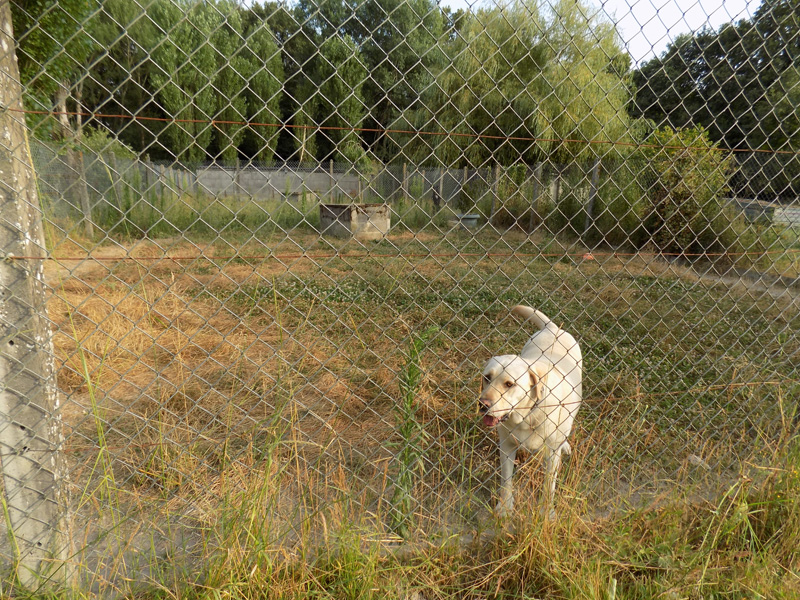 pension chien indre