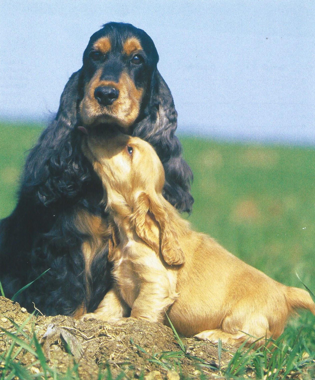 pension chien indre