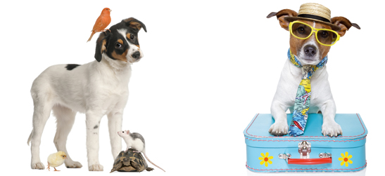 pension chien isle sur la sorgue