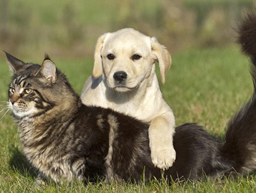 pension chien izon