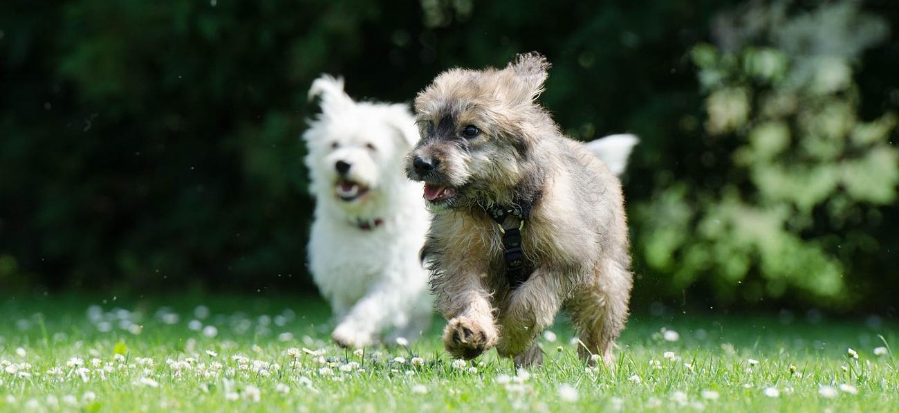 pension chien juvignac