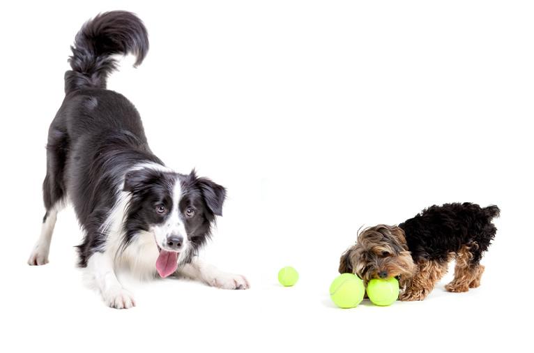 pension chien kamouraska