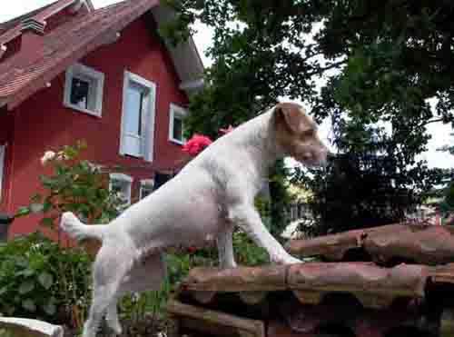 pension chien keskastel