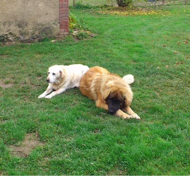 pension chien loiret