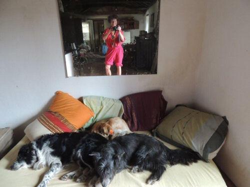 pension chien lozere