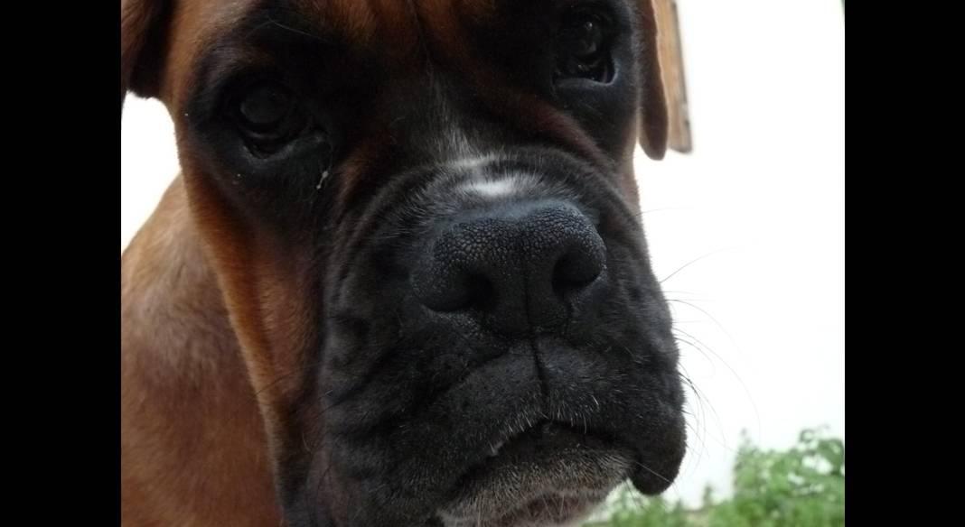 pension chien martigues