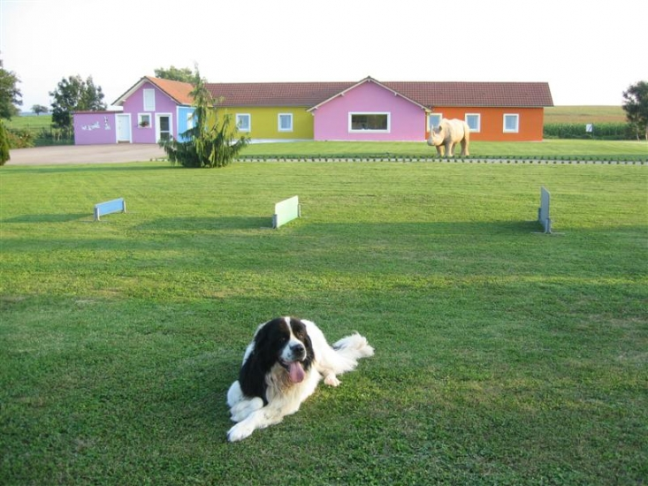 pension chien mulhouse