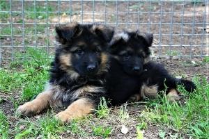 pension chien neoules