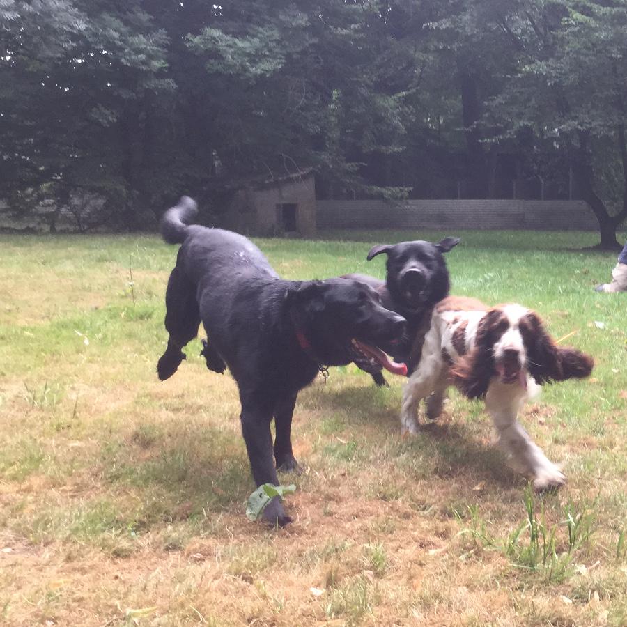 pension chien nievre