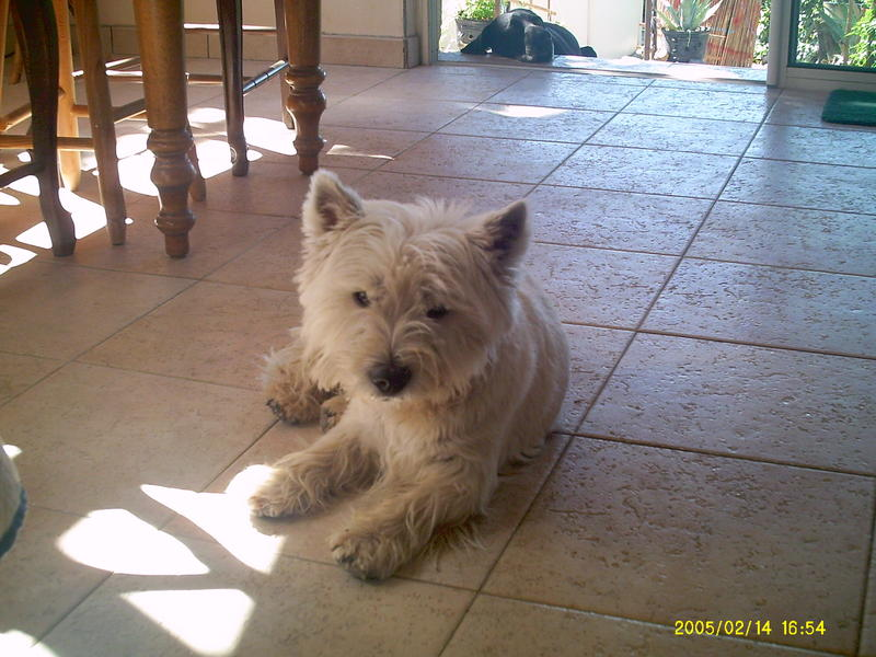 pension chien nyons