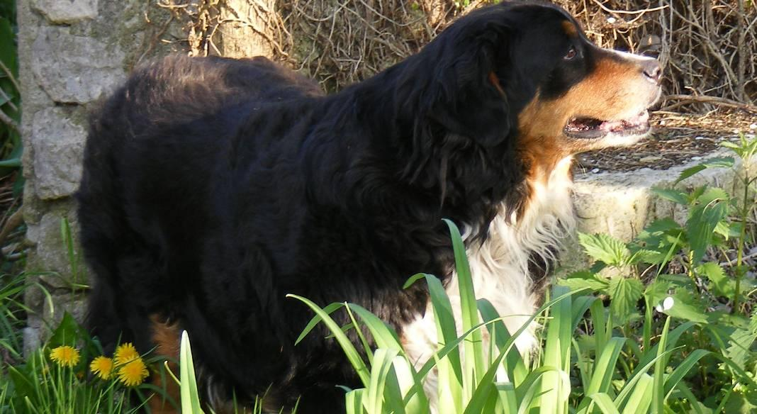 pension chien orleans