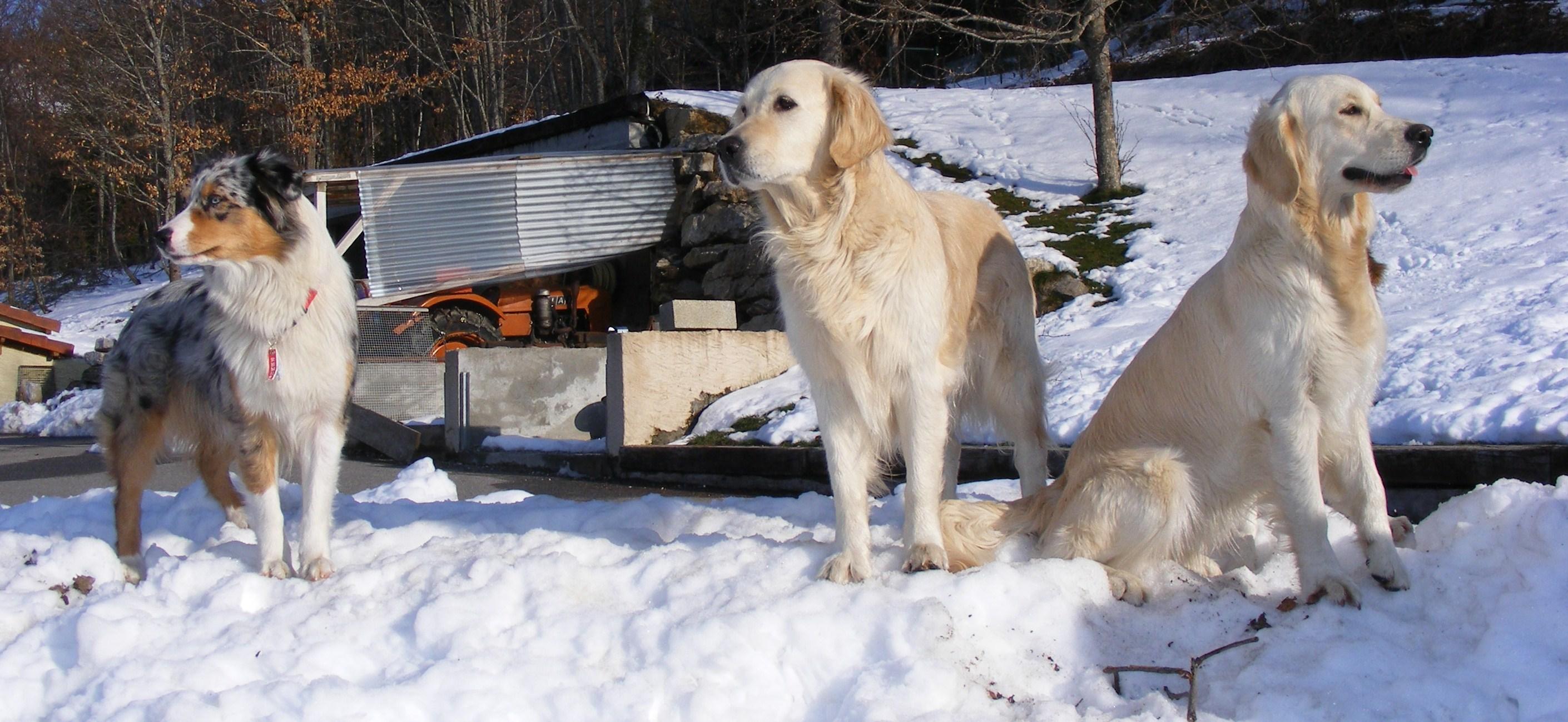 pension chien pays de gex