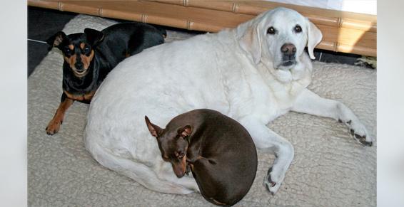 pension chien peille