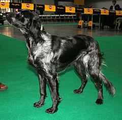 pension chien picardie