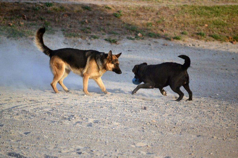 pension chien puyricard