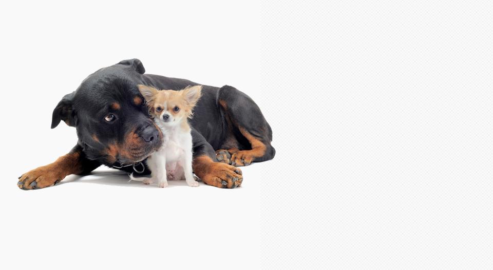 pension chien qc