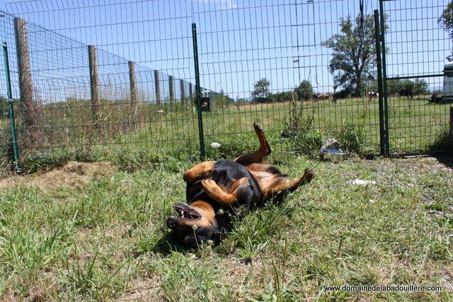 pension chien rhone alpes
