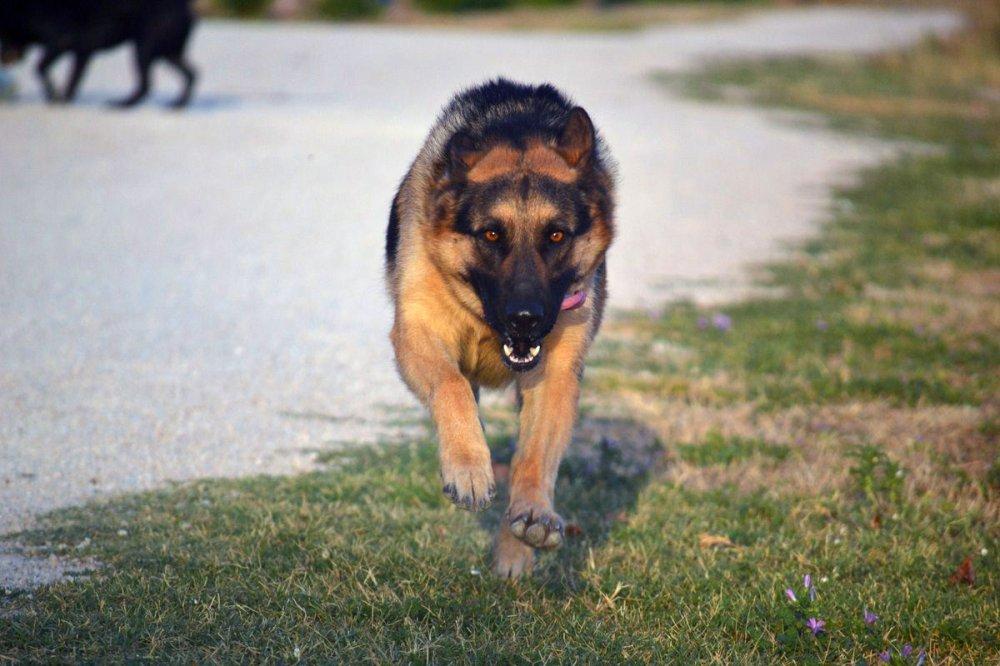 pension chien rhone