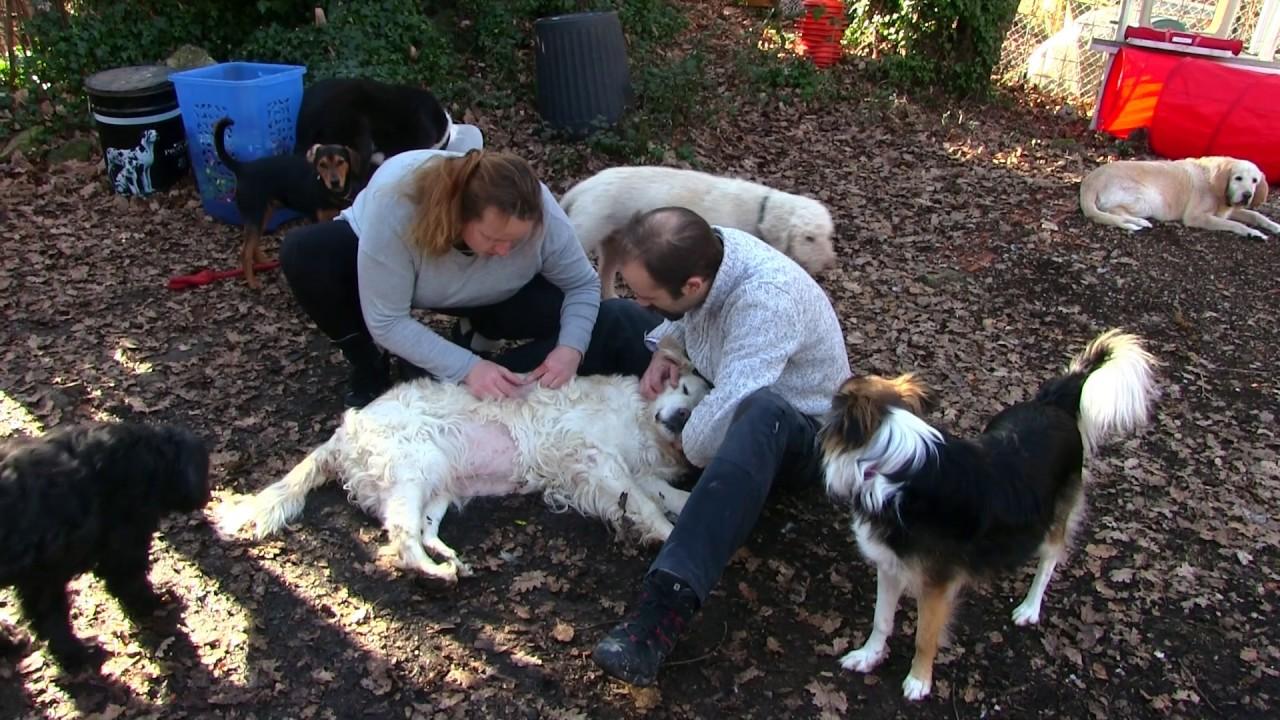 pension chien saint vallier de thiey
