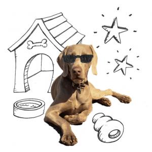 pension chien salernes