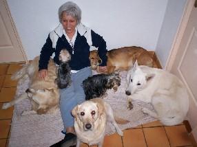 pension chien sarrians