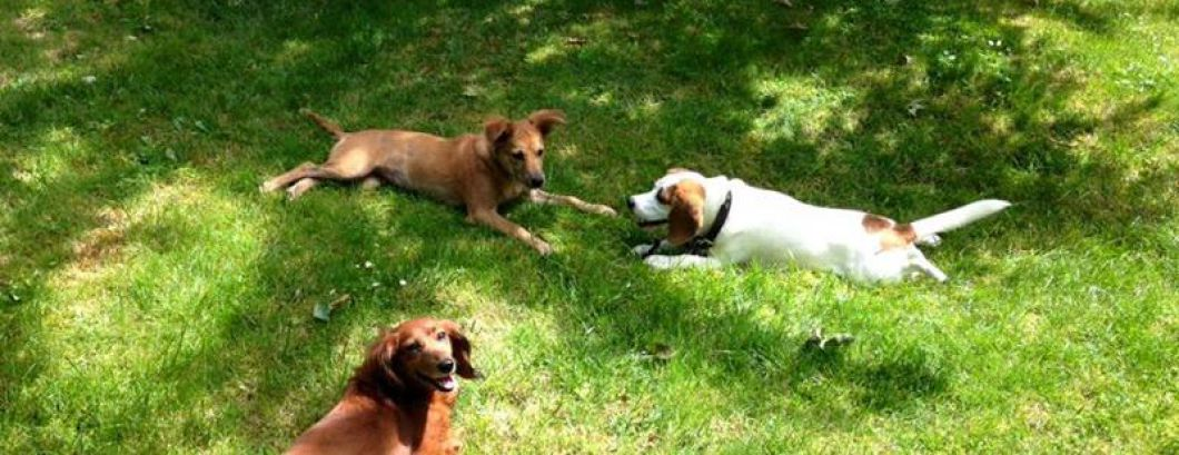pension chien seine et marne
