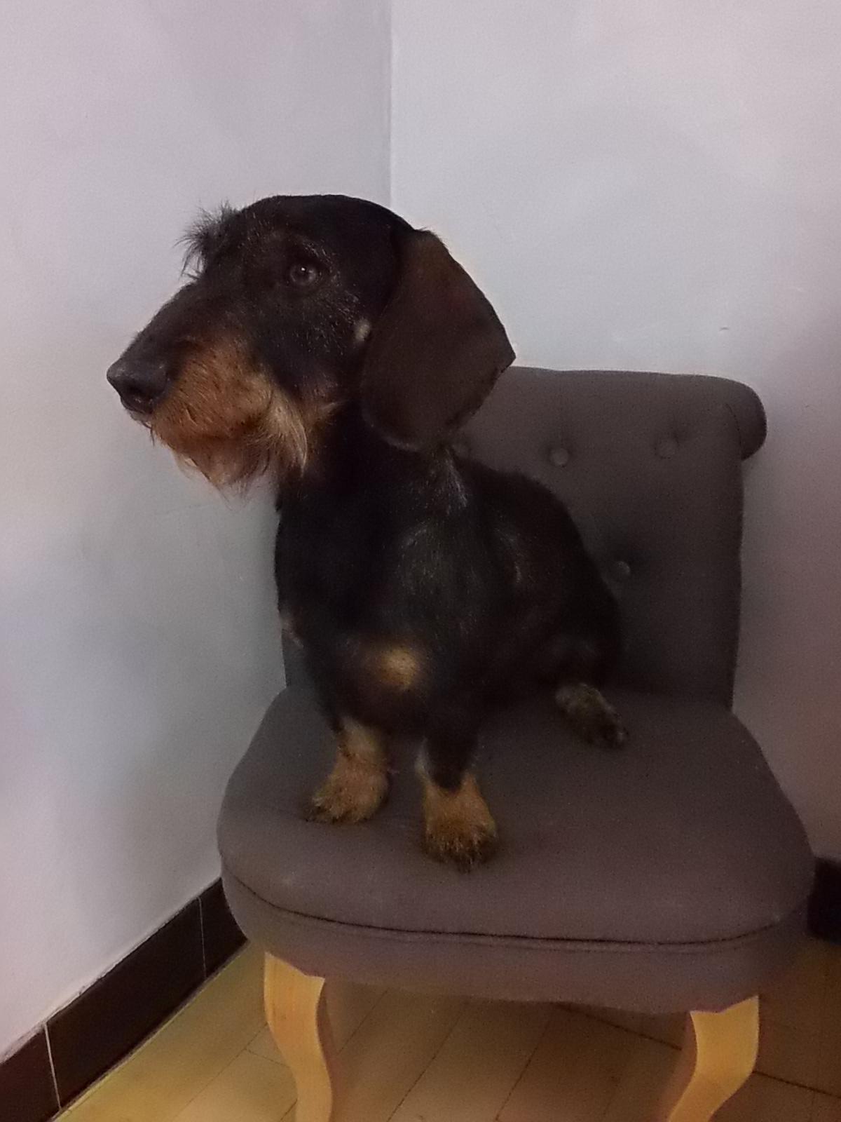 pension chien sisteron
