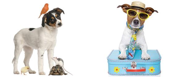 pension chien sorgues