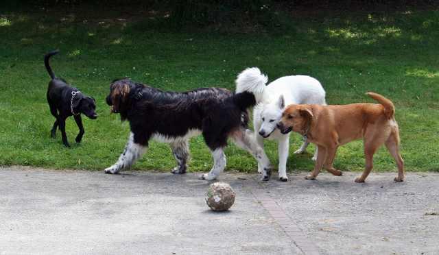 pension chien toulouse