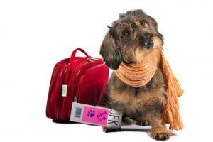 pension chien vacances