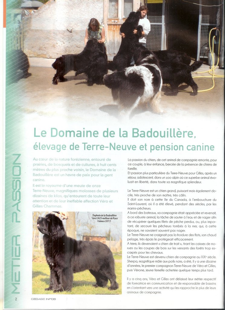 pension chien valence