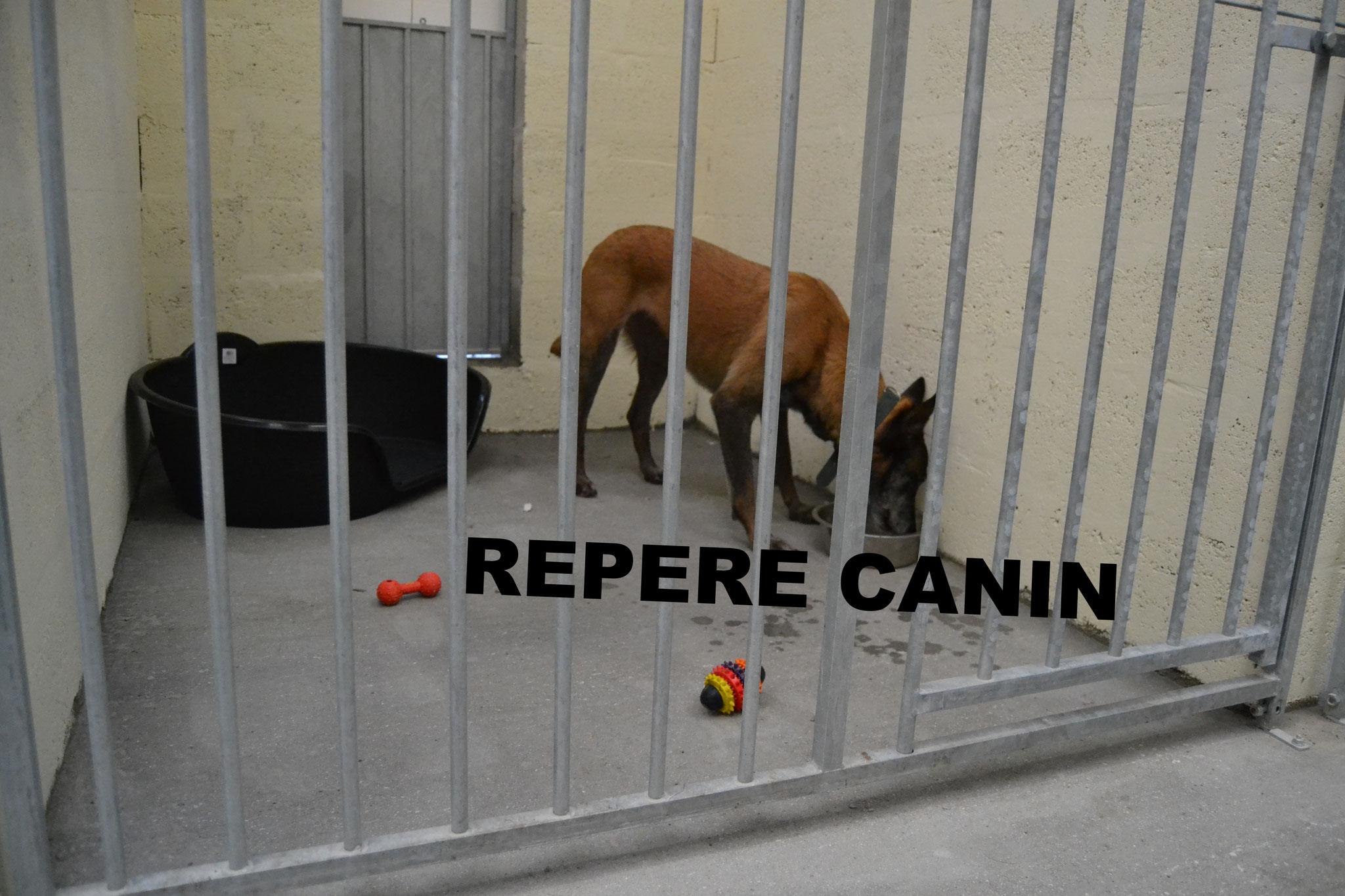 pension chien vannes