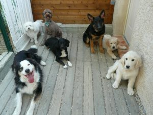 pension chien vaucluse