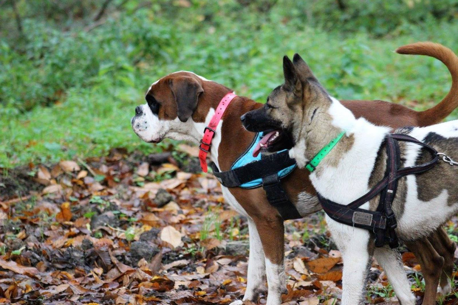 pension chien versailles