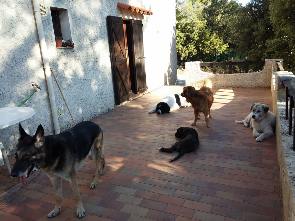 pension chien villecroze