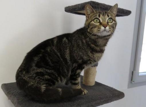 nous proposons des chats et chatons à adopter sur nantes et pays de la  loire.chats déjà stérilisés, identifiés, suivis par un vétérinaire.  part.financière