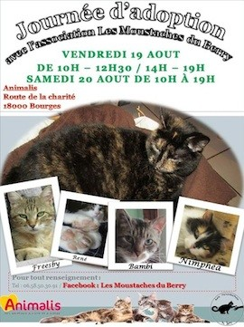 refuge chat bourges