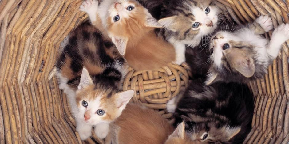 refuge chat bruxelles