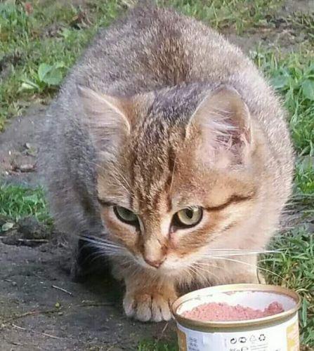 refuge chat dans le 95