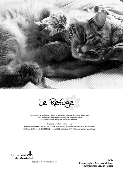 refuge chat de la faculte de medecine veterinaire