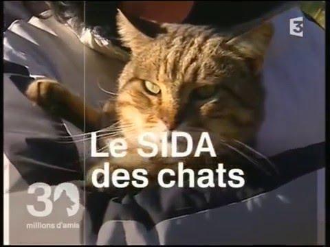 refuge chat destrousse